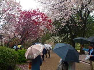 umbrellas under pink