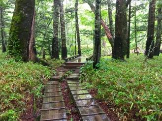 rainy walk through the woods