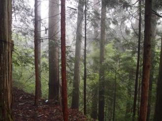 Forest on the way to the Okumiya (Inner Shrine)