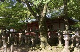 Tamukeyama Hachimangu