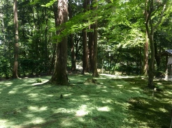 moss garden at Toshodaiji Temple