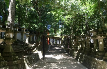 stone lanterns on the path to Kasuga Taisha Shrine